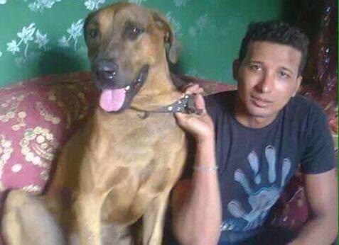 ما هى حكاية كلب شارع الاهرام و سبب ذبحه