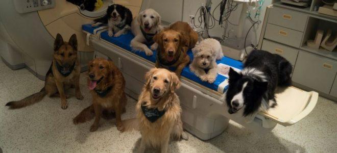 بحث يظهر أن الكلاب تفهم حقا مثل البشر