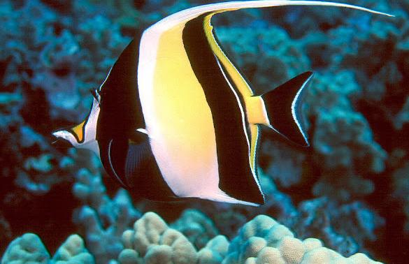 -4 نصائح يجب مراعاتها عند الاحتفاظ بأسماك أخرى مع جراد البحر الحيوانك الأليف