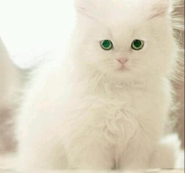 -3 نصائح لاختيار نظام غذائي جيد للقطط