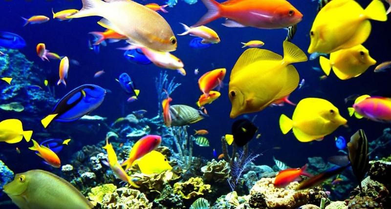 4 نصائح للمبتدئين لبدء حوض السمك الخاص بك