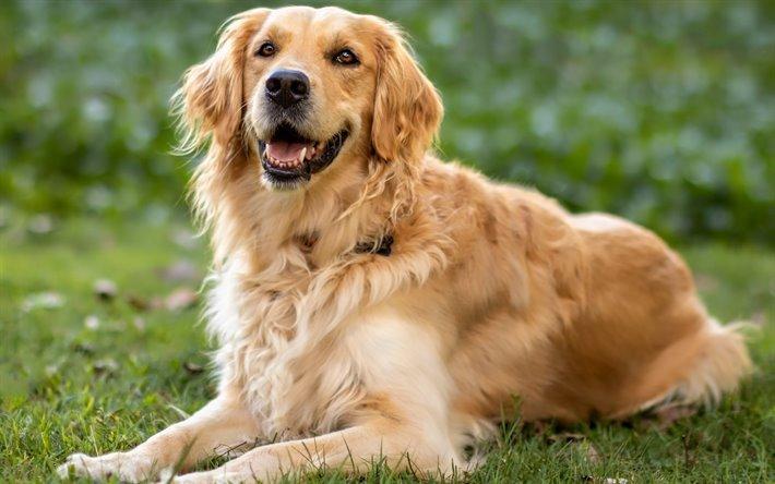5 نصائح لعدم استجابة الكلب لصاحبه في بعض الاحيان